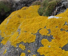 Typical lichen